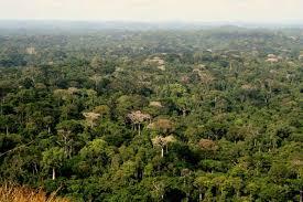 La  Banque Mondiale s'engage pour la sauvegarde de la forêt ivoirienne.